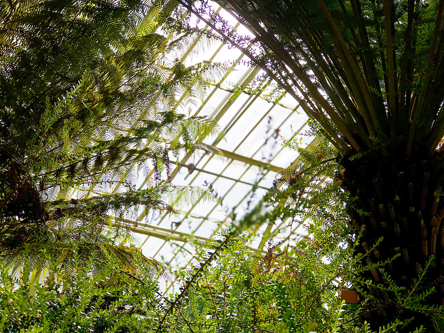 dublin national botanic garden