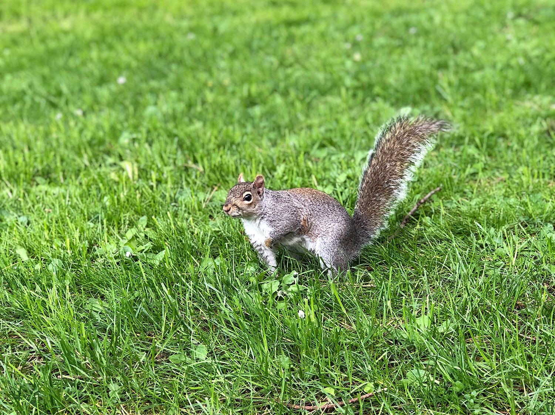 buddy das eichhörnchen