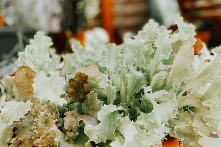 gartengrün gemüseanbau selbstversorger salat